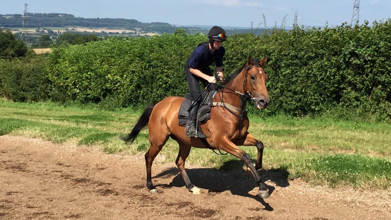 Dalaman August 2015 | Syndicate Racehorse Ownership - Diamond Racing