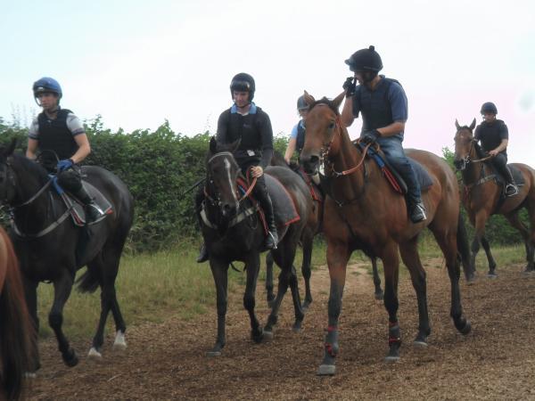 Horse Welfare | Syndicate Racehorse Ownership - Diamond Racing