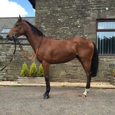 Racing Knight | Syndicate Racehorse Ownership - Diamond Racing