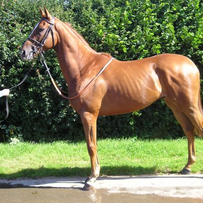 racing syndicate and racehorse ownership | Syndicate Racehorse Ownership - Diamond Racing