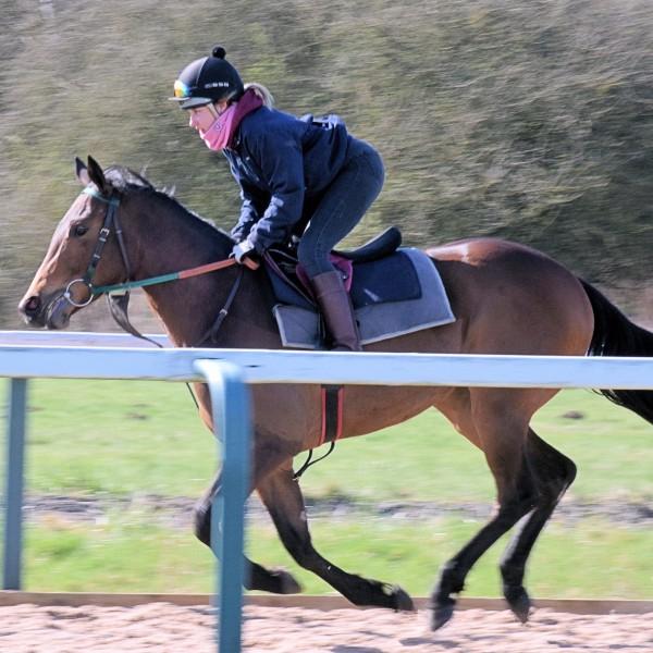 Liamba gallop 3 | Syndicate Racehorse Ownership - Diamond Racing