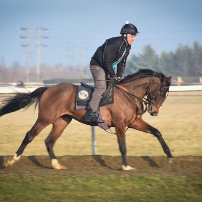 Balgowlah gallops | Syndicate Racehorse Ownership - Diamond Racing