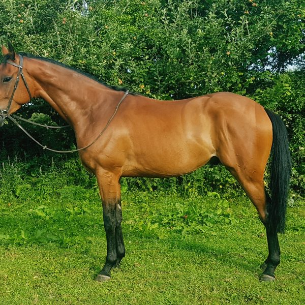 Triassic 3 | Syndicate Racehorse Ownership - Diamond Racing
