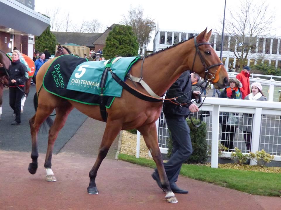 Dalaman Cheltenham New Years Day | Syndicate Racehorse Ownership - Diamond Racing