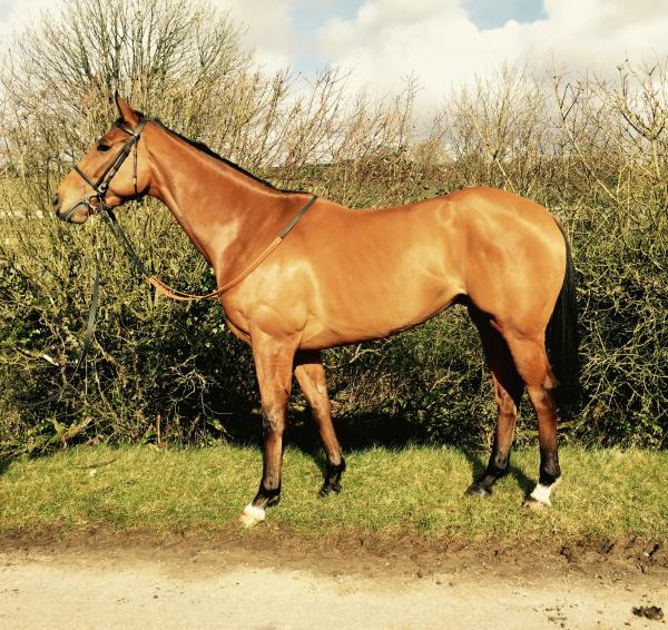 Dalaman | Syndicate Racehorse Ownership - Diamond Racing