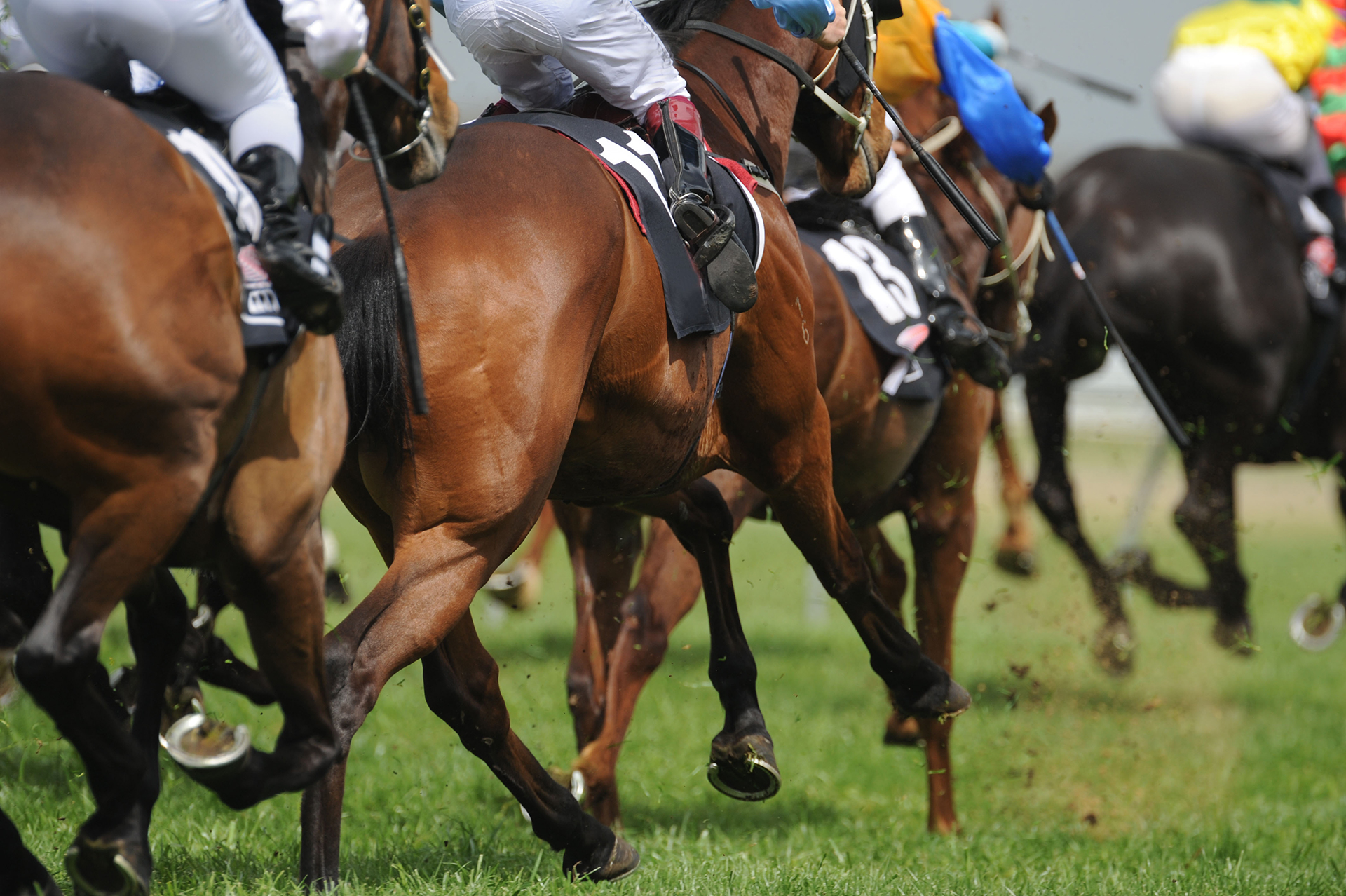 Horses galloping   Syndicate Racehorse Ownership - Diamond Racing