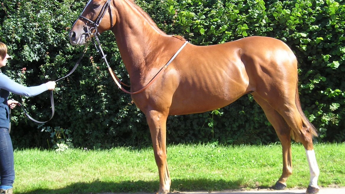 racing syndicate and racehorse ownership   Syndicate Racehorse Ownership - Diamond Racing