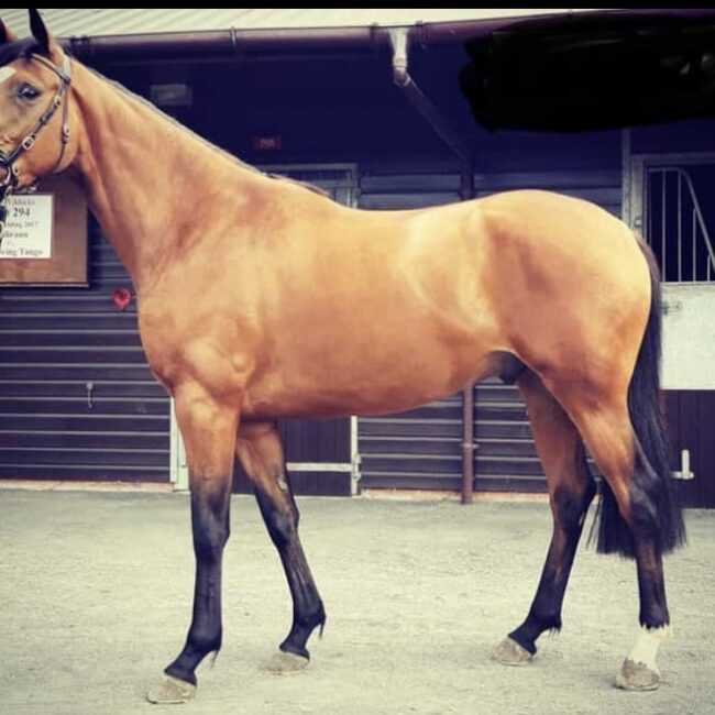 3yr old Brother of The Romford Pele
